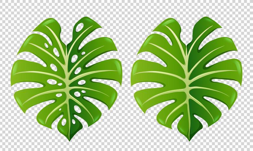 Två mönster av gröna blad vektor