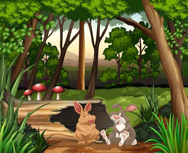 Szene mit zwei Kaninchen im Wald vektor
