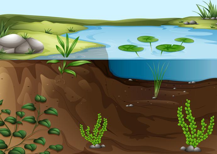Ein Ökosystem im Teich vektor