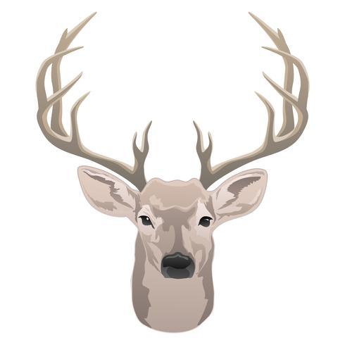 Hjort huvud, vacker buck med vasslar färg isolerad vektor illustration