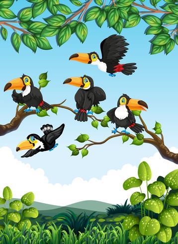 Grupp av toucan i naturen vektor