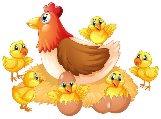 Getrenntes Huhn und Küken vektor