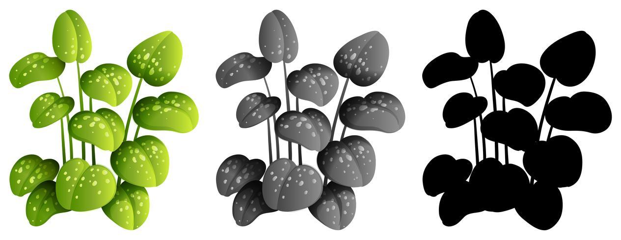 Set von Zierpflanzen vektor