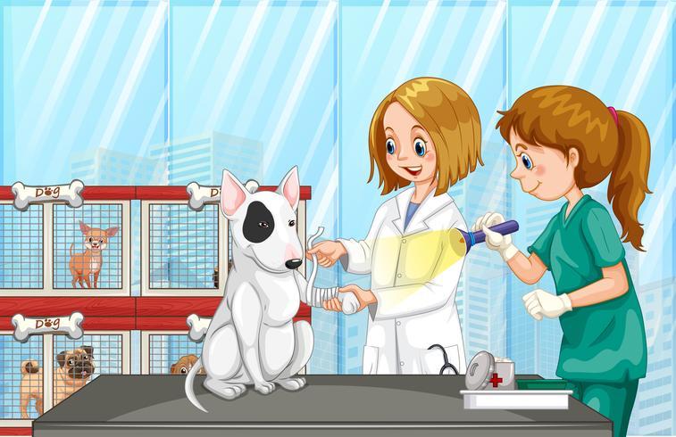 Vet som hjälper en hund i kliniken vektor