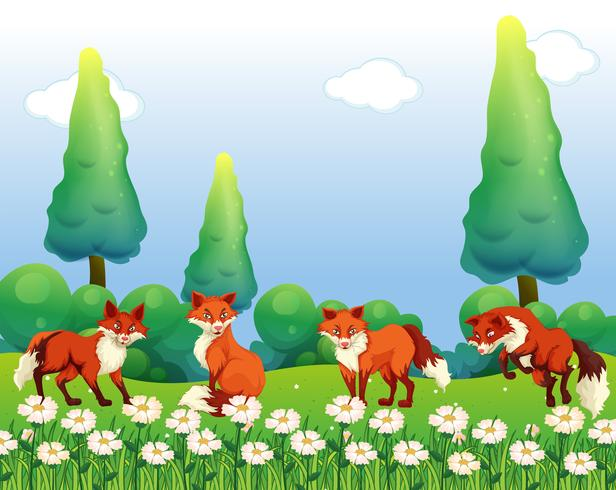 Vier Füchse im Blumenfeld vektor