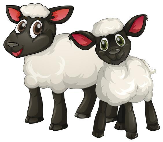 Två vita lamm ler vektor