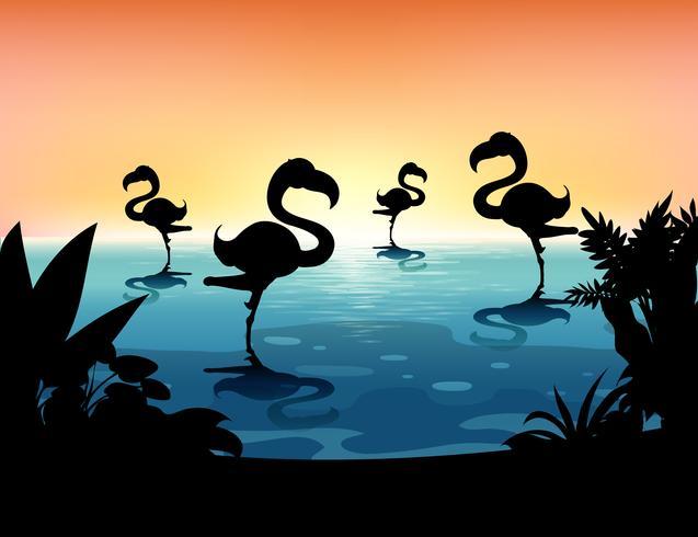 Sihouette-Szene mit Flamingo im Teich vektor