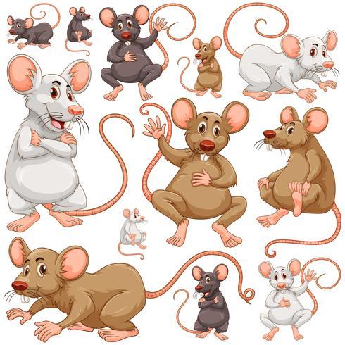 Nahtloser Hintergrund mit vielen Ratten vektor