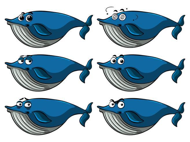 Blauwal mit verschiedenen Gesichtsausdrücken vektor