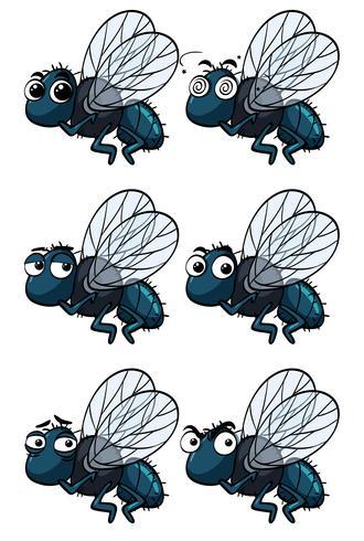 Stubenfliegen mit verschiedenen Emotionen vektor