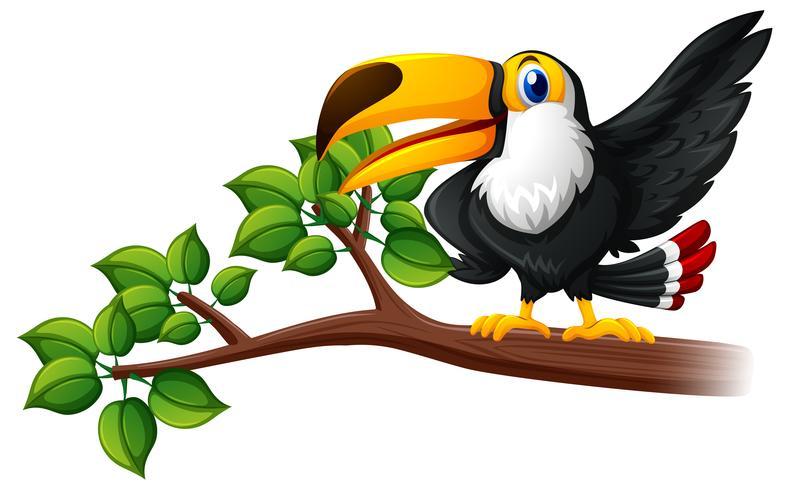 Toucan fågel på grenen vektor