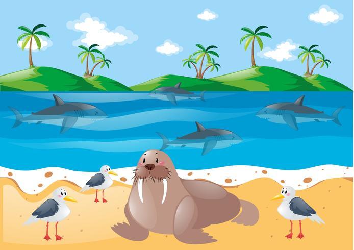 Havsdjur och duvor på stranden vektor