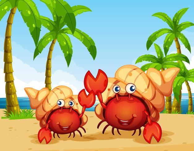 Zwei Einsiedlerkrebse am Strand vektor