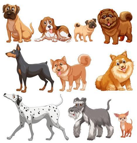 Hunde vektor
