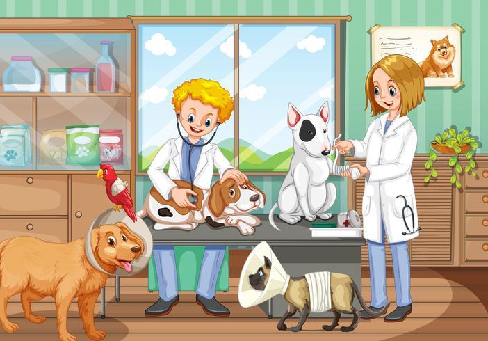 Två veterinärer som arbetar på djursjukhuset vektor