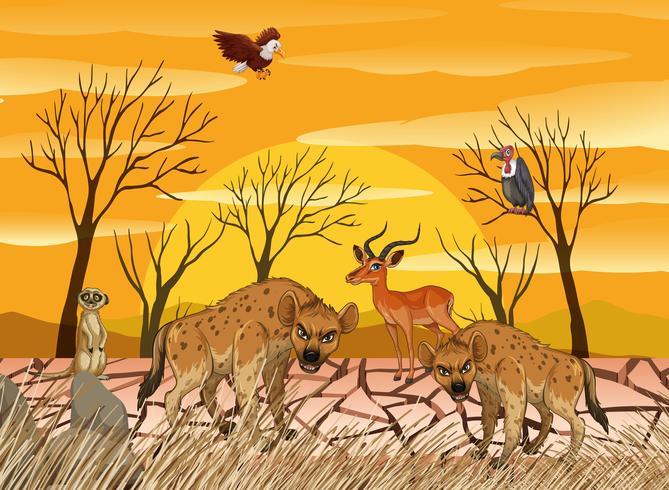 Wilde Tiere leben in trockenem Land vektor