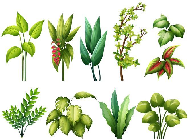 Pflanzen vektor