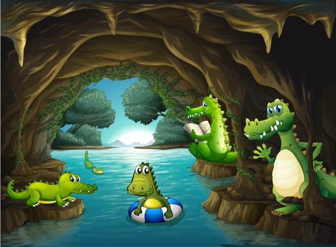 Krokodiler som simmar i grottan vektor