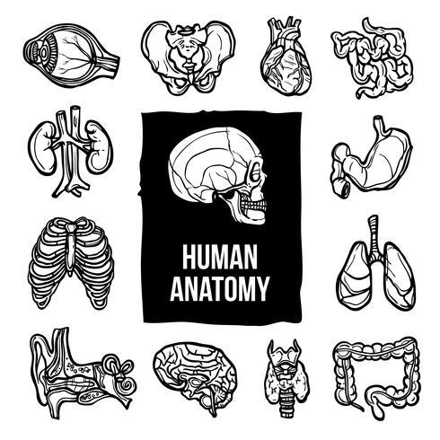 Anatomie Icons Set vektor
