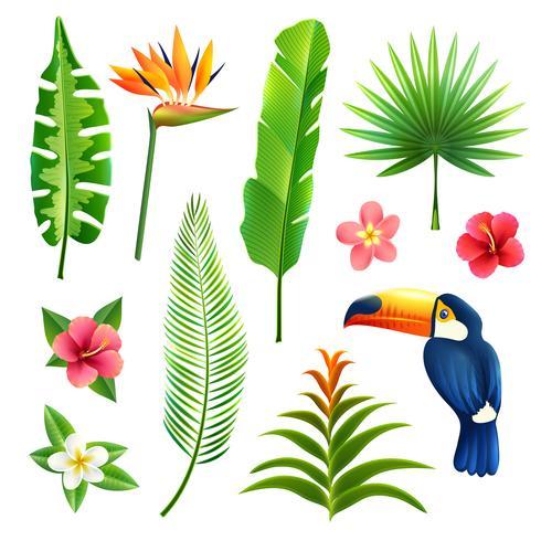 Tropiska blad Set vektor
