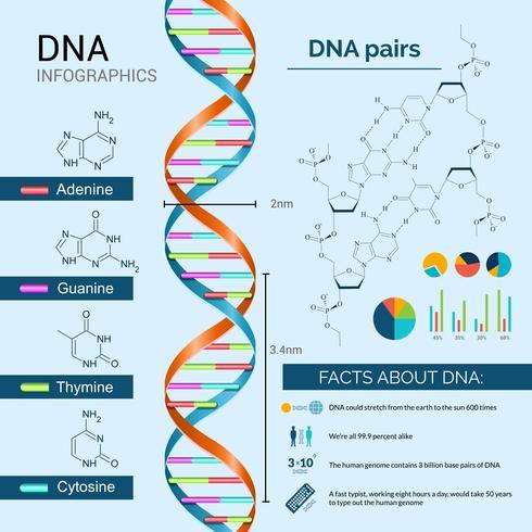 DNA-Infografiken-Set vektor