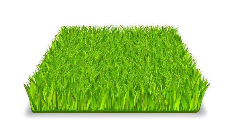 grönt gräs vektor