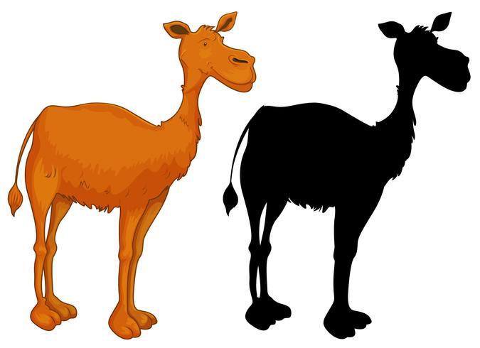 Set av kamelkaraktär vektor