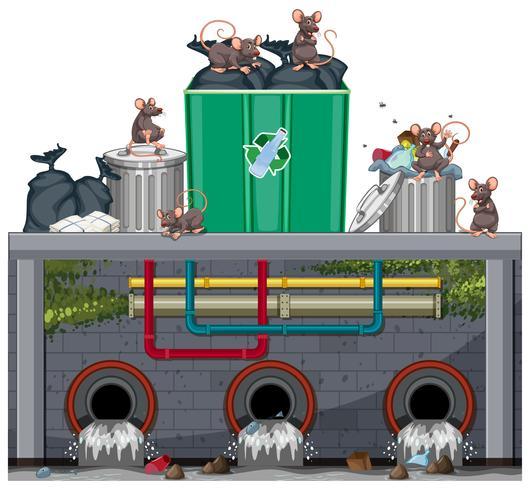 Avfallshantering med råtta vektor