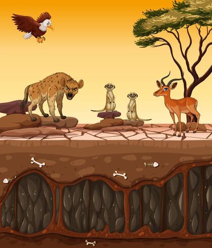 Ett torrt land och vilda djur vektor