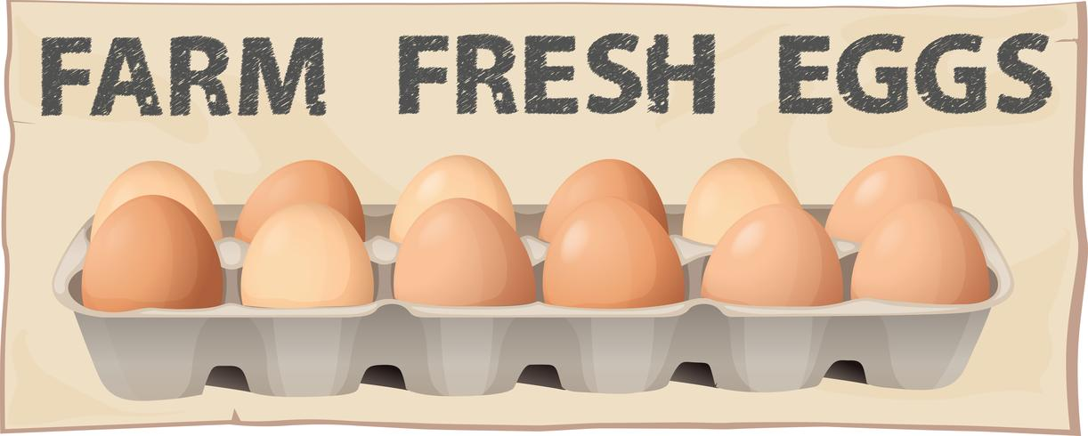 Farm färsk ägg vektor