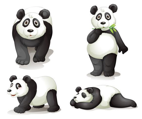 en panda vektor
