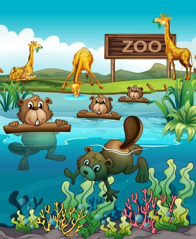 Djur i djurparken vektor