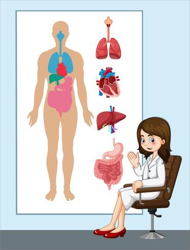 Läkare och anatomi diagram vektor