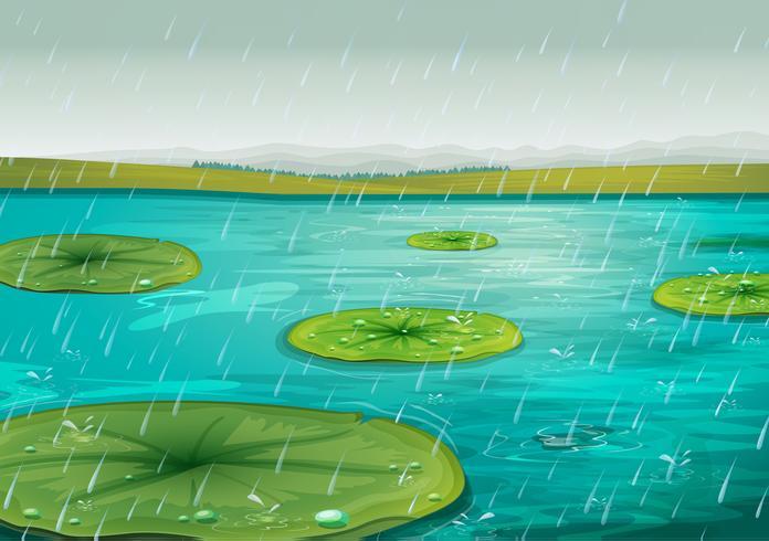 Regn på dammen vektor