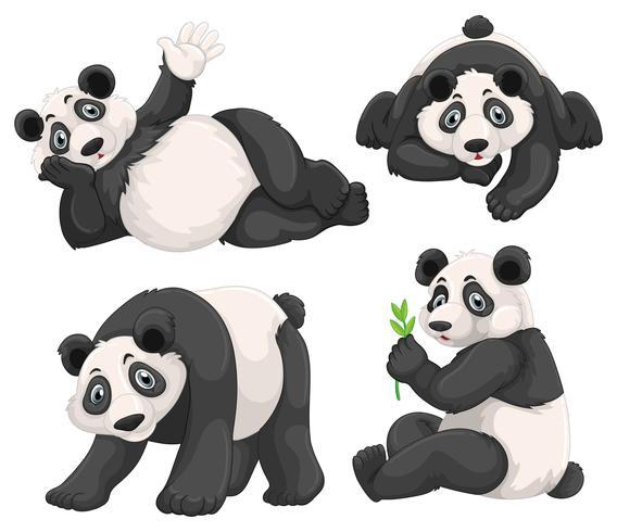 Panda i fyra olika poser vektor