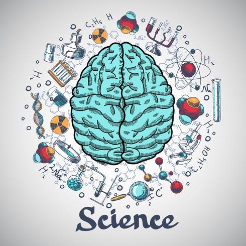 Gehirn Skizze Wissenschaftskonzept vektor