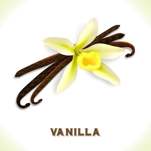 Vaniljpudding isolerad på vit vektor