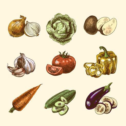 Grönsaker skissa uppsättning färg vektor