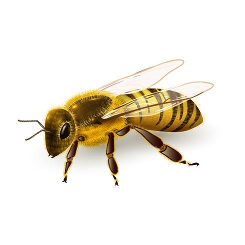 Wasp realistisk isolerad vektor