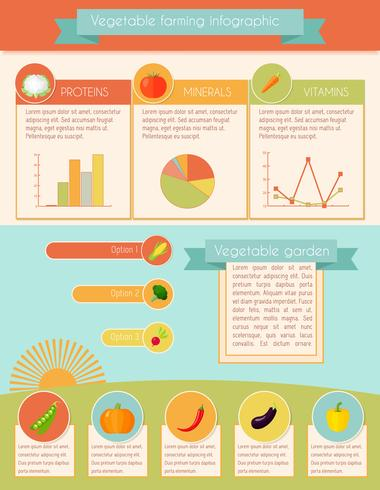 Grönsaker Infographic Set vektor