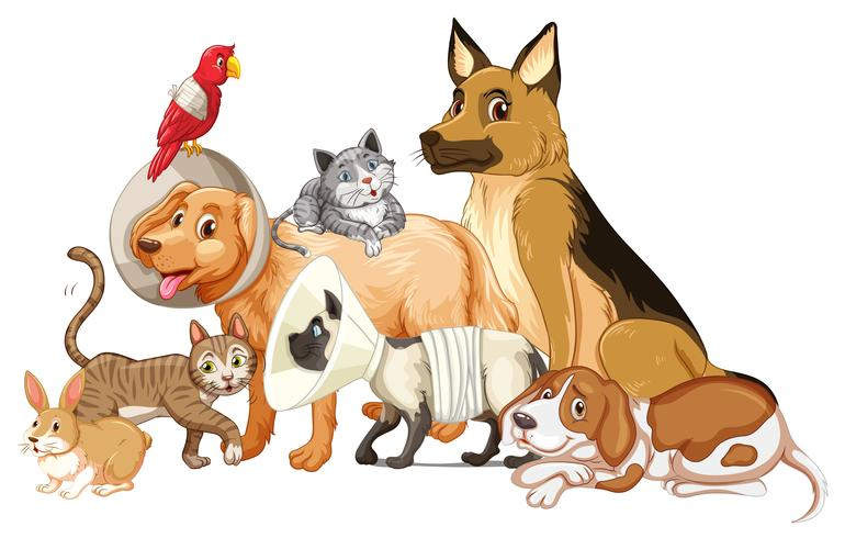 Andere Art von Haustier verletzt vektor
