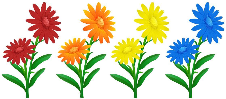 Ringelblumenblüten in vier Farben vektor