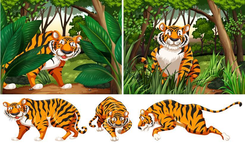 Tigrar i den djupa skogen vektor