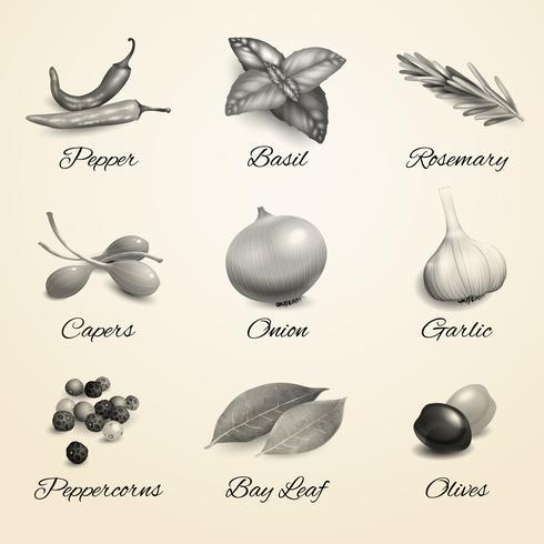 Örter och kryddor vektor