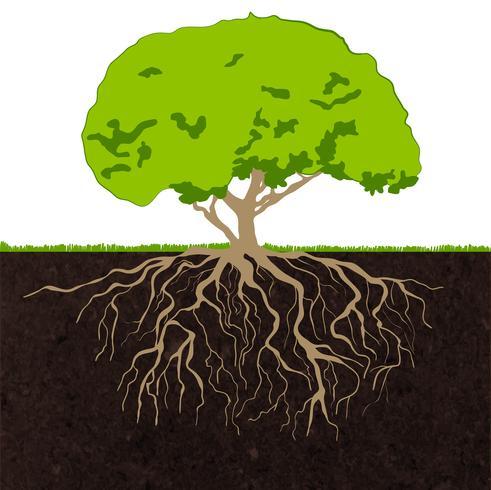 Tree rötter skiss vektor