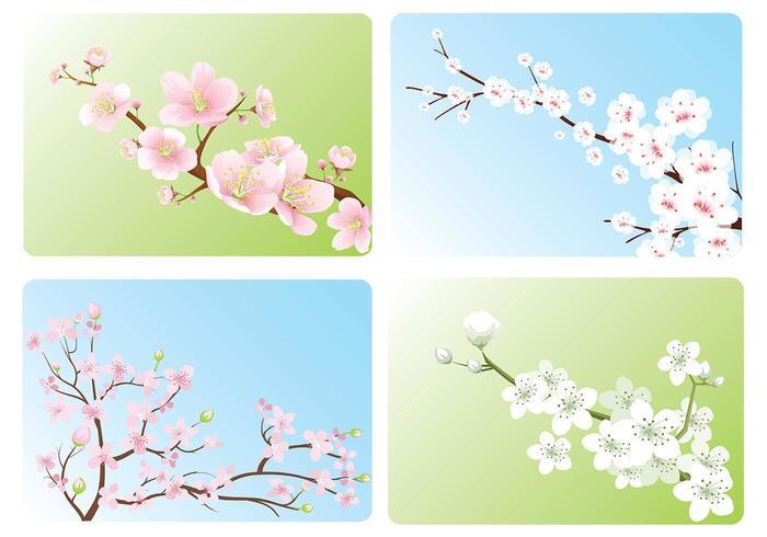 Kirschblüten-Tapete-vektor-Satz vektor