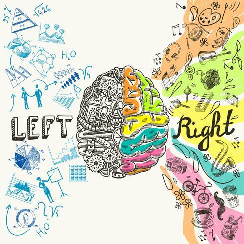 Gehirnhälften-Skizze vektor