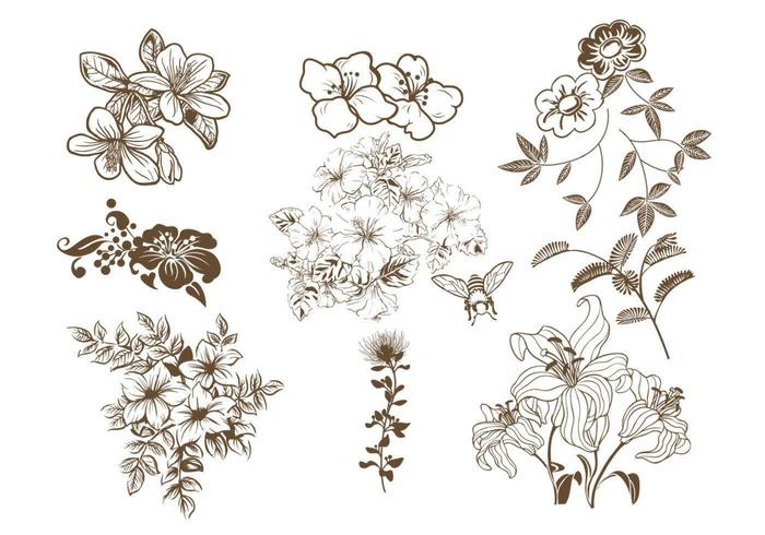 Hand gezeichnetes Blumenvektor-Satz vektor