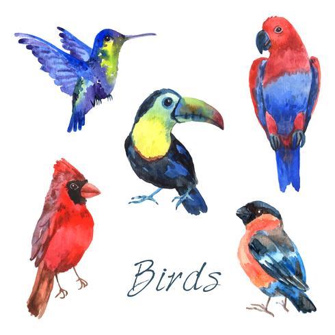 Exotiska tropiska fåglar vattenfärg ikoner uppsättning vektor