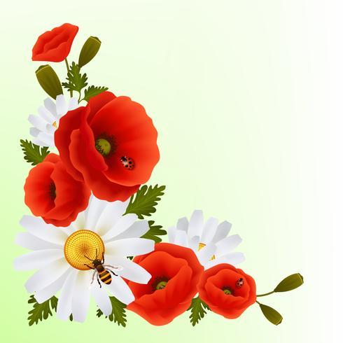 Vallmo daisy bakgrund vektor